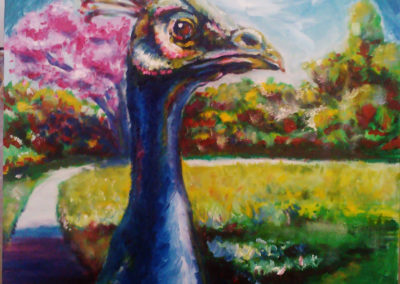 Oil Painting: Peacock from Arboretum